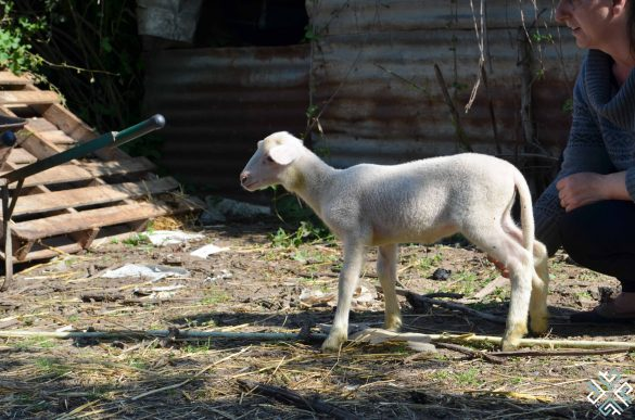 Farm Life at Montanema Handmade Village