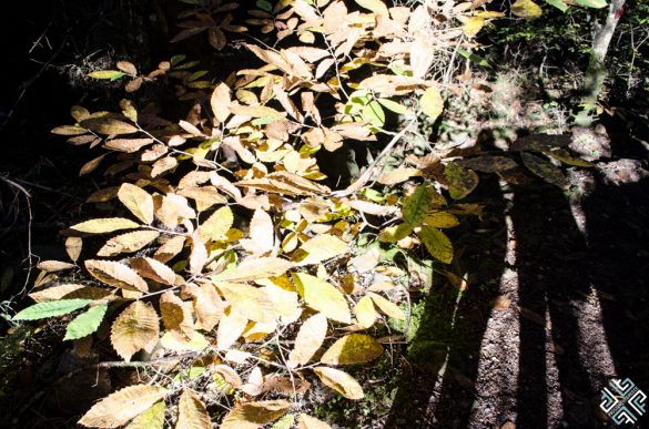 Oreini Nafpaktia: Autumn in Greece