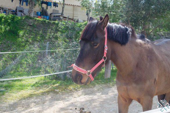 Sunday at Kouvaras Equestrian Club