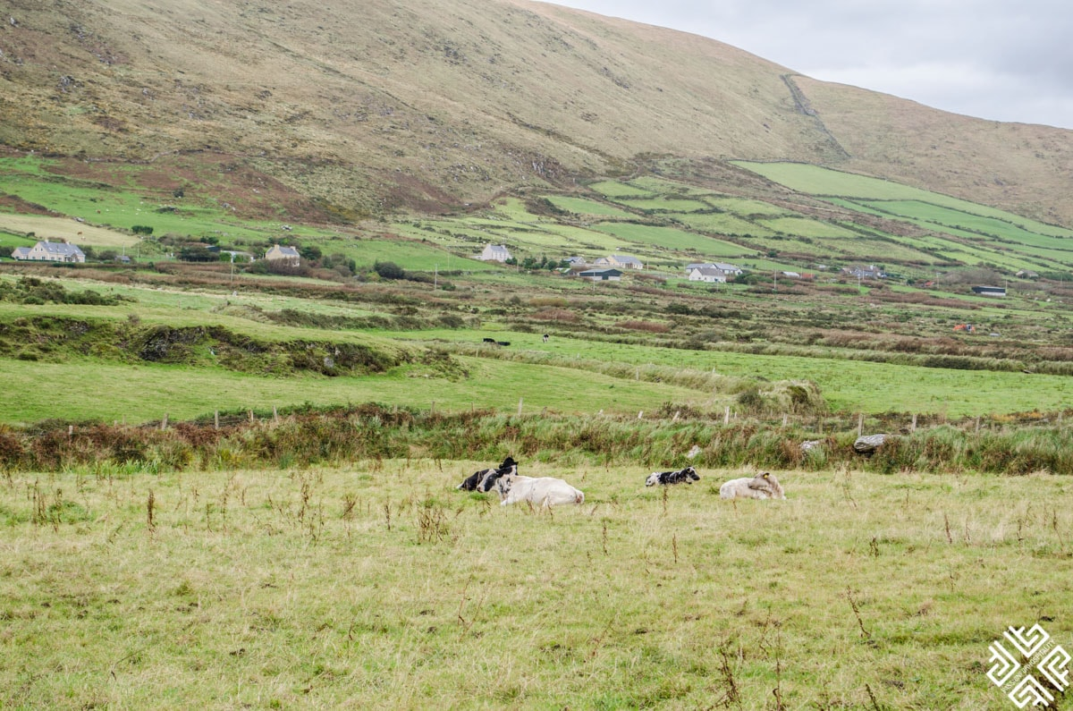Ireland: Ring of Kerry and the Skellig Coast day trip