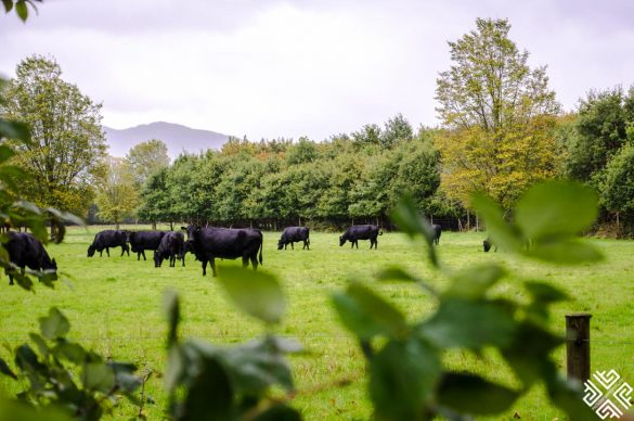 The Top Killarney Attractions
